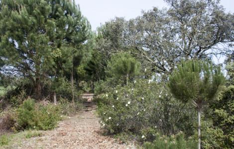 Trazado del ferrocarril minero Tharsis-Corrales en Huelva. eobservan restos de las traviesas de madera. Autora: Marta Santofimia. Fuente: Minas de SIerra Morena. 2013